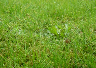 Lawn close up