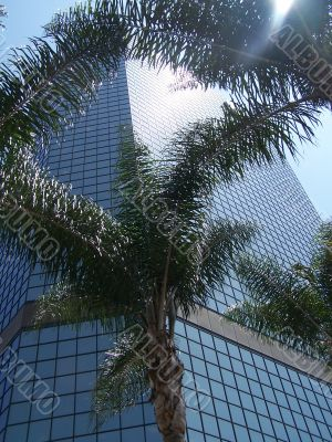 Palm Tree In Downtown San Diego