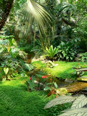 Ferns & tropical stream