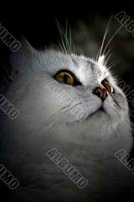 surprise dreamy glance