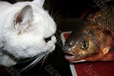 cat looks at fish