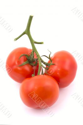 Three full red tomatoes on a branch.