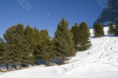 Contrast in nature: forest, snow, sky, full moon