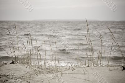 Beach with grass in bad weather