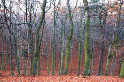 mystic autumn forest