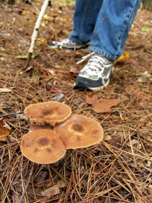 Mushroom Hunt