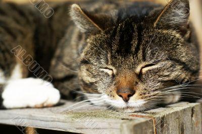 Peaceful asleep.