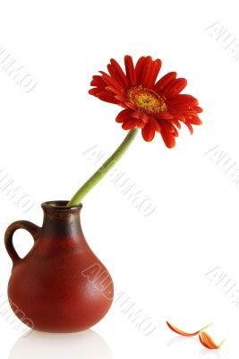 gerber in a vase and couple single petals