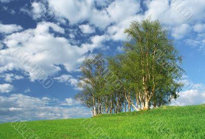 Nice clumb of trees