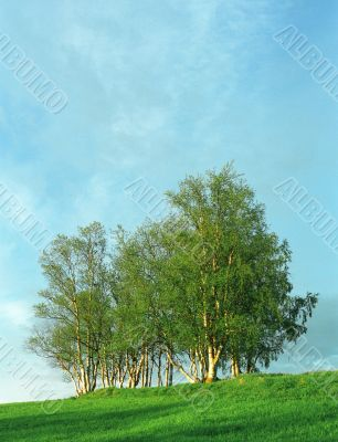 Nice clumb of trees and grass