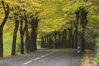 Easy leaf fall