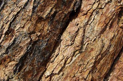 texture tree, close-up