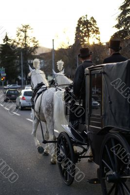 horsed carriage in the city