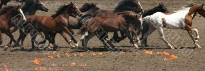 Running horses and fire circles
