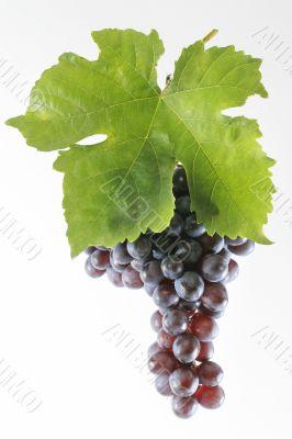 Grapes brush