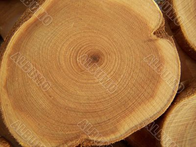Annual circles of wood