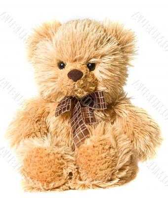 small fluffy Bear