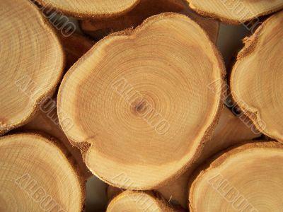 Cross section of juniper tree.