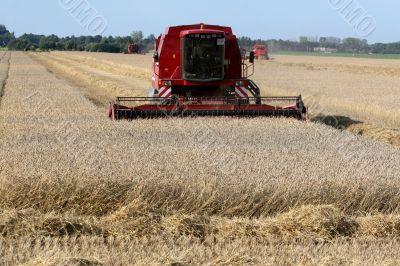 Machine harvesting