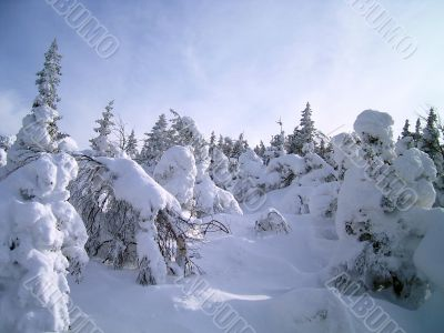 winter in mountains, woods