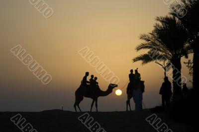 Silhouette of Camel rides in the desert