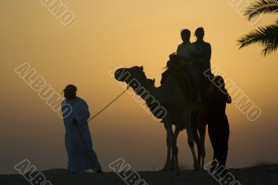 Late afternoon camel rides in the Dubai desert
