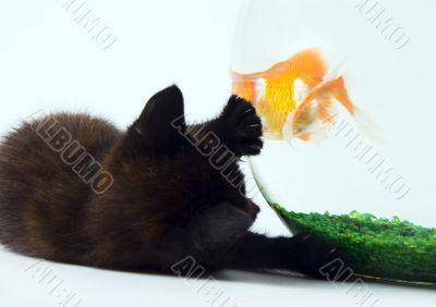Cat & Gold fish