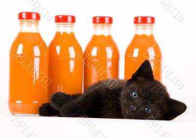 Cat & Orange drink