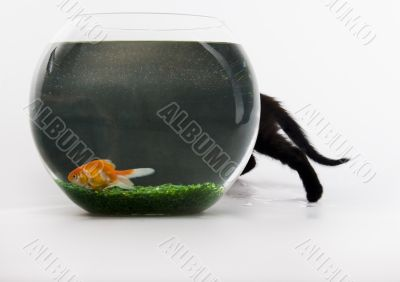 Black cat & Gold fish