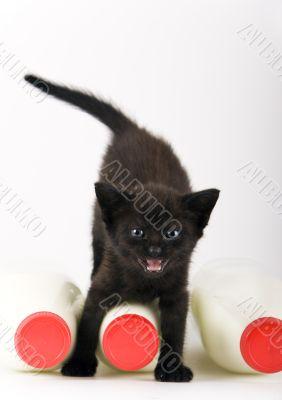 Cat & Milk