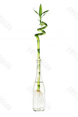 green bamboo in glass bottle