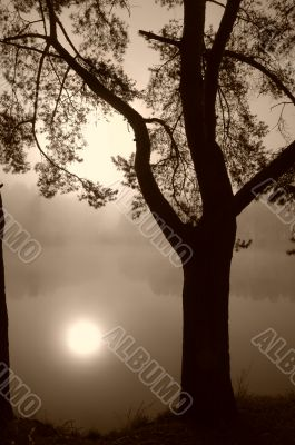 Tree on a Lake Shore in Fog