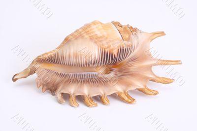 One big shellfish