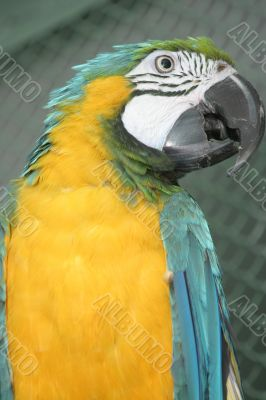 Bright parrot in a zoo