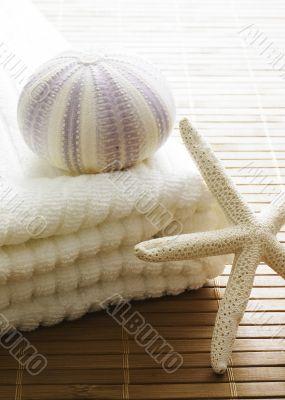 decor zen sea shells