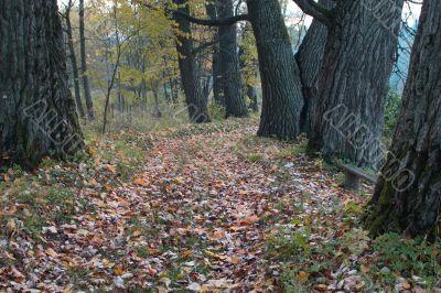 Footpath in an autumn wood