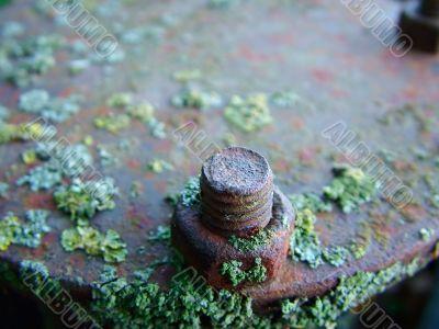 Rusty nut