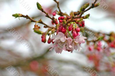 Pink Flowers in Springtime