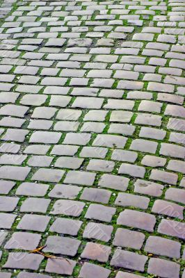Old Cobbles with Green Moss