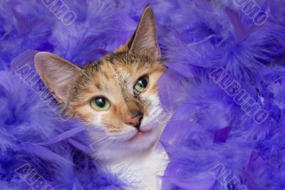 cat in feathers