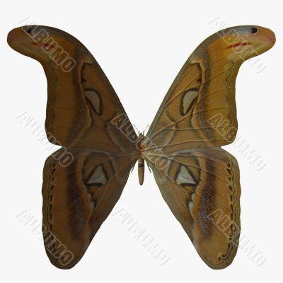 Butterfly-Atlas