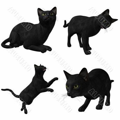 Cat-Black American Short Hair