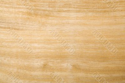 Ash wood background / texture