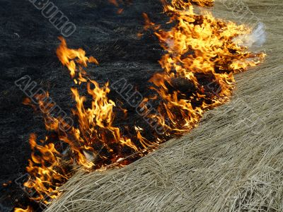 flame and dry grass