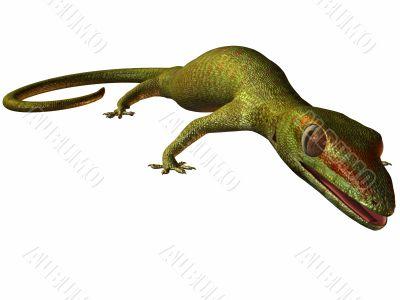 Gecko 3D