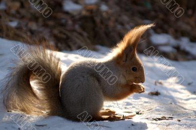 Squirrel Punk