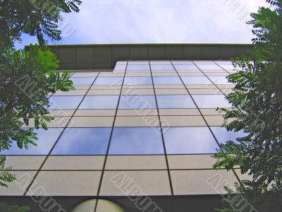 Mirror Office and Trees
