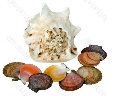 Sea shells on a white background - 2