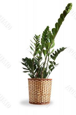 Nice Indoor Plant