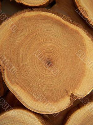Annual circles of juniper wood